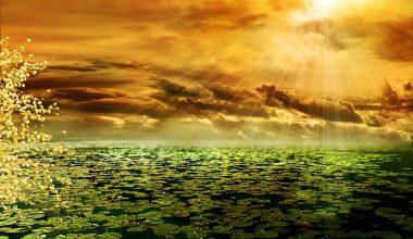 nimatnya sinar matahari bagi tubuh dan kehidupan
